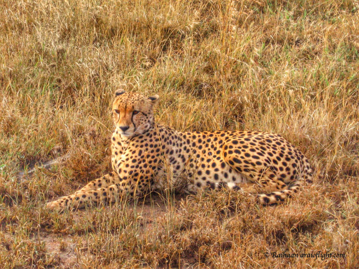 20 Reasons Travel South Africa 8