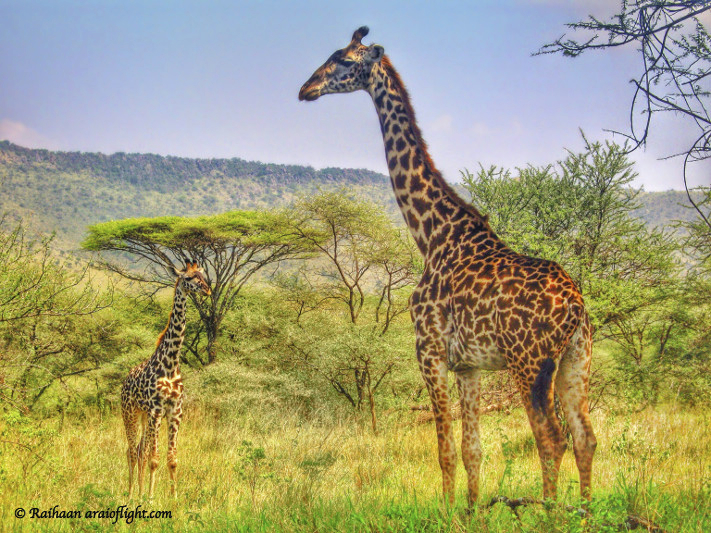 20 Reasons Travel South Africa 9