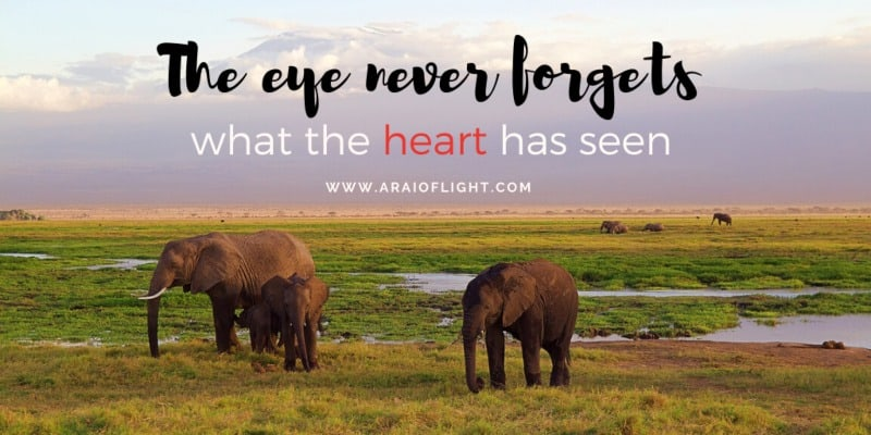 Quotes African Proverbs Family of Elephants standing Kilimanjaro