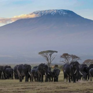 Kilimanjaro mountain Elephants