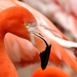 bird closeup flamingo aruba beach