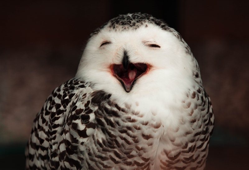 bird smile quotes about smiling and love a rai of light