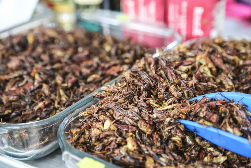 Chapulines Grasshoppers Pre-hispanic food Mexico city insect food