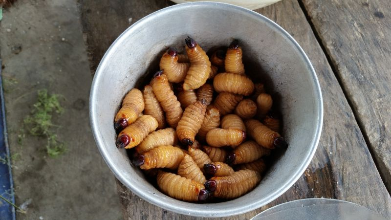 Eating Coconut silk worms in cup vietnam weird exotic food