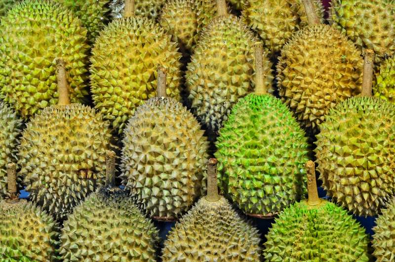 Eating Durian SE Asia market weird food