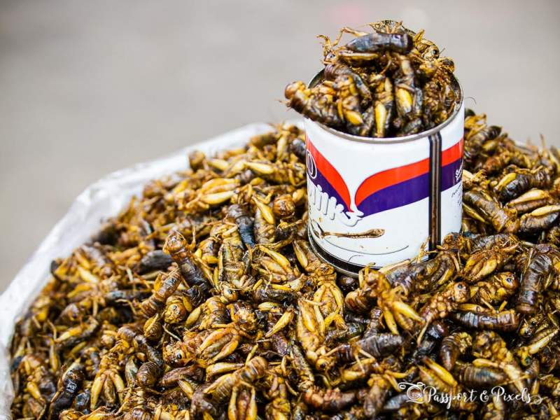 Eating Insects Locusts bugs Myanmar