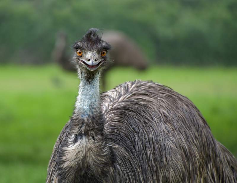 Emu Smile sayings Instagram