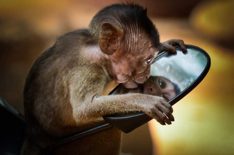 Monkey looking into mirror smile captions for instagram