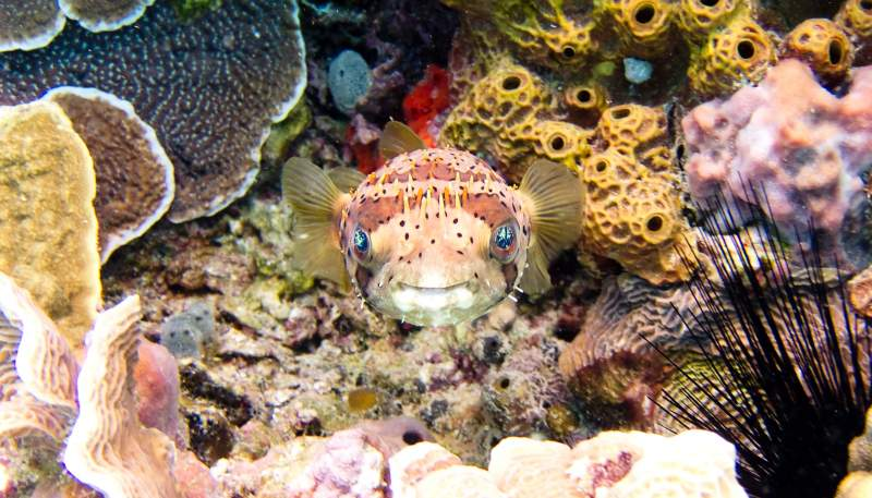 Smile fish coral ocean quotes
