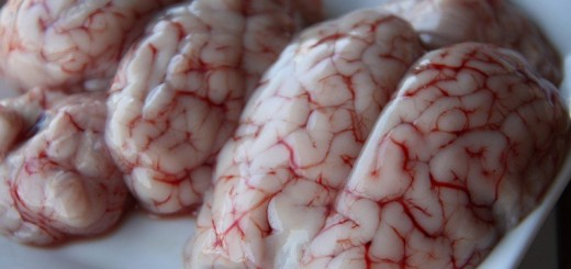eatin Brain strange unusual odd disgusting food around the world