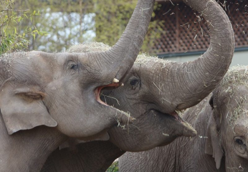 elephants feeding LYRICS ABOUT SMILING