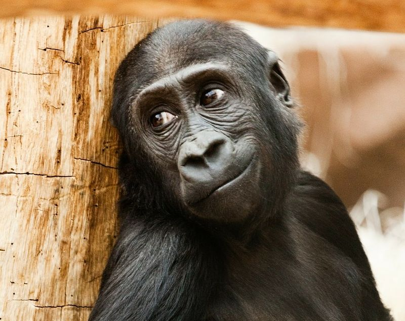 handome monkey SMILE QUOTES ABOUT LIFE