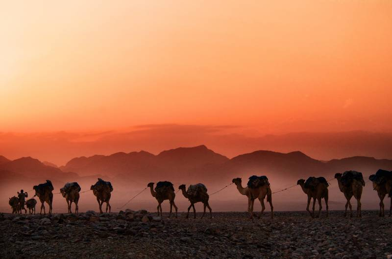 Beautiful African country Sunset in Africa Ethiopia camels