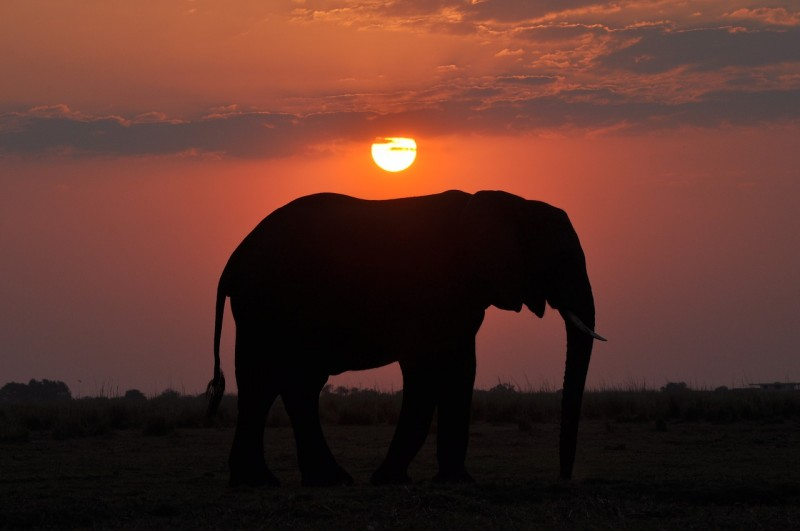 Beautiful African sunset behind lone elephant