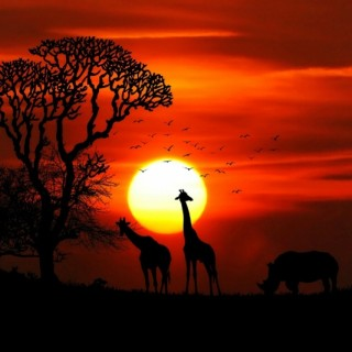 Beautiful African sunset Countries in Africa with animals safari